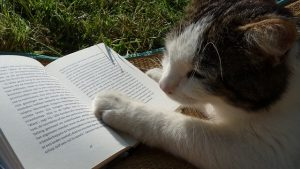 Kitty cat with a book open. looking to the left.